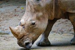 Rhino at the zoo stock photography