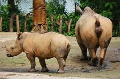Rhino at the zoo stock image