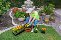 Adult Senior planting flowers Stock Image