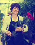 Adult shop assistant displaying bright red roses Royalty Free Stock Images