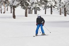 Adult skiing on a snowy forest landscape. Winter sport. Horizontal Royalty Free Stock Photos
