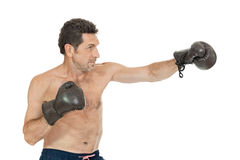 Adult smiling man boxing sport gloves boxer isolated Stock Photos