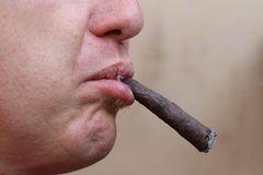 Adult smoker with long cigar in mouth Stock Photo