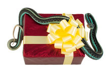Adult snake with his tongue hanging out is on the red gift box with a yellow bow Stock Photography