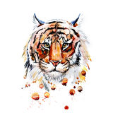 Adult tiger graphic, vector Royalty Free Stock Image