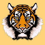 Adult tiger head face realistic Royalty Free Stock Photo