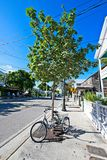 An adult tricycle is parked on a tree lined street in Key West Florida.  royalty free stock image