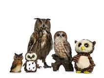 Row / collection of owls; stuffed animals, ceramic and Turkmenian Eagle owl / bubo bubo turcomanus sitting isolated on white backg royalty free stock image