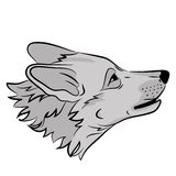 Adult wolf head face
