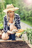 Adult woman picking vegetables from garden Stock Image