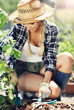 Adult woman picking vegetables from garden Stock Photography