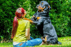 Adult Woman And A Purebred Adult Male Rottweiler stock photos