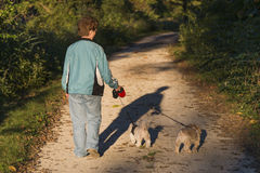 Adult Woman Walking Her Puppies At Sunset Stock Photos