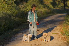 Adult Woman Walking Her Two Puppie At Sunset Royalty Free Stock Images