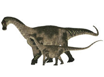 Adult and Young Antarctosaurus Royalty Free Stock Photography