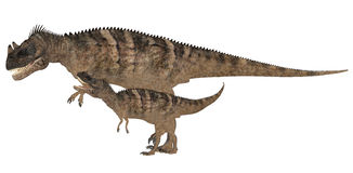 Adult and Young Ceratosaurus Stock Photography