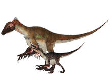 Adult and Young Utahraptor Royalty Free Stock Photo