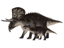 Adult and Young Zuniceratops Stock Photo