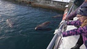 Adultes et enfants observant pour la natation du nord animale sauvage d'otarie dans l'océan banque de vidéos