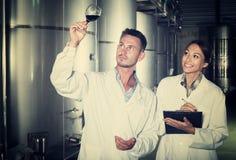Adulto dos expertos que examinan el vino Fotos de archivo libres de regalías