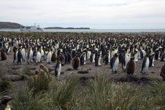 Adulto e pinguins de rei juvenis na colônia com o navio no fundo fotos de stock