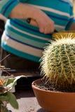 Adulto mayor con el cactus Imágenes de archivo libres de regalías