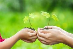 Adulto y niño que sostienen poca planta verde en manos Fotografía de archivo libre de regalías