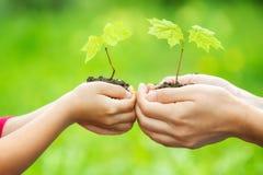 Adulto y niño que sostienen poca planta verde en manos Fotos de archivo