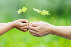 Adulto y niño que sostienen poca planta verde en manos Imagen de archivo libre de regalías