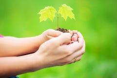 Adulto y niño que sostienen poca planta verde en manos Imágenes de archivo libres de regalías