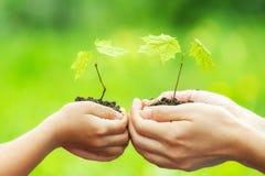 Adulto y niño que sostienen poca planta verde en manos Imagenes de archivo