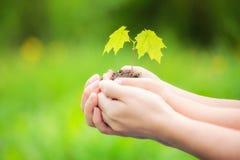 Adulto y niño que sostienen poca planta verde en manos Foto de archivo libre de regalías