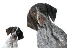 Adulto y perrito Imagen de archivo