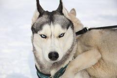 Adulto y perrito fornidos Fotografía de archivo libre de regalías