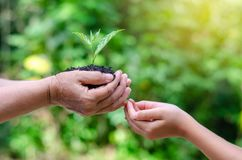 Adults Baby Hand tree environment Earth Day In the hands of trees growing seedlings. Bokeh green Background Female hand holding tr stock images