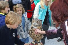 Adults and children are petting an eagle owl Royalty Free Stock Photo