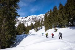 Adults snowshoeing thruogh forest in Kaiserau with mountain Kreuzkogel, Styria. Group of adults snowshoeing thruogh a forest on snowy plateau Kaiserau with stock images