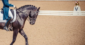 Dressage horse and rider. Black horse portrait during dressage competition. Stock Photo