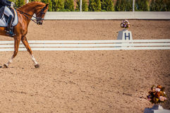 Dressage horse and rider. Brown chestnut horse portrait during dressage competition. Royalty Free Stock Photography
