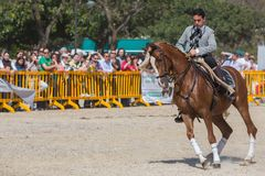 Advanced Dressage test Royalty Free Stock Images