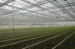 Advanced Dutch greenhouse complex small plants Stock Photos