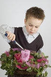 Advenimiento Imagen de archivo libre de regalías