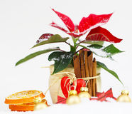 Advent star in Christmas decoration Stock Image