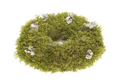 Advent wreath made out of moss, isolated Royalty Free Stock Photo