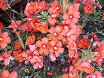 Adventive växt Royaltyfri Fotografi