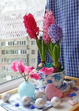 Advents composition with a cyclamens and hyacinths Royalty Free Stock Image