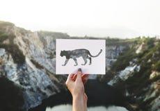 Adventure, Animal, Art, Beautiful Stock Image