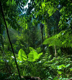Adventure background. Green jungle Royalty Free Stock Images