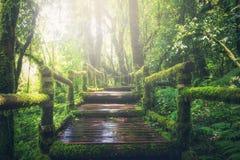 Adventure, Beautiful, Boardwalk royalty free stock image