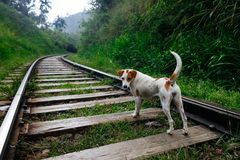 Happy travel dog stay on train tracks. Adventure trip stock photos